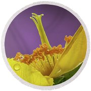 St Johns Wort Flower Round Beach Towel