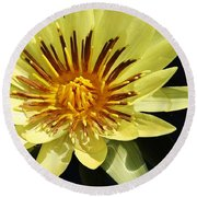 Round Beach Towel featuring the photograph St. Louis Gold Waterlily by Bruce Bley