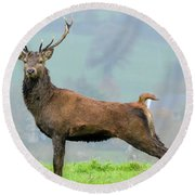 Stag Round Beach Towel