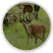 Stag Of The Herd. Round Beach Towel