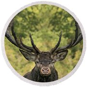 Stag Panorama Round Beach Towel