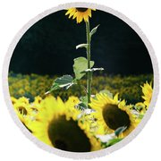 Round Beach Towel featuring the photograph Stand Out 2 by Andrea Anderegg