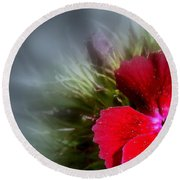 Round Beach Towel featuring the photograph Stardust by Elfriede Fulda