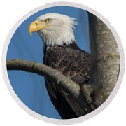Staredown By Eagle  Round Beach Towel