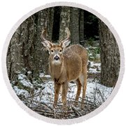 Staring Buck Round Beach Towel