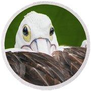 Staring Pelican Round Beach Towel