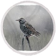 Starling In Winter Round Beach Towel