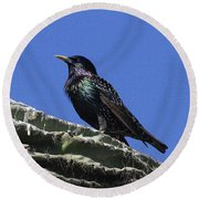 Starling On Saguaro Arm Round Beach Towel by Tom Janca