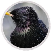 Starling Round Beach Towel
