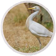 Round Beach Towel featuring the photograph Stately Walking Cattle Egret by Nick Biemans