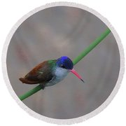 Stay Away From My Feeder Round Beach Towel by John Kolenberg