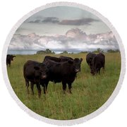 Steers In The Pasture Round Beach Towel