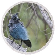 Round Beach Towel featuring the photograph Stellar's Jay by Gary Lengyel