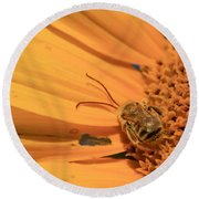 Round Beach Towel featuring the photograph Still Sleeping by Chris Berry