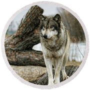 Still Wolf Round Beach Towel