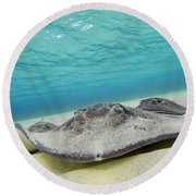 Round Beach Towel featuring the photograph Stingrays Under Water by Adam Romanowicz