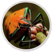 Stink Bug 666 Round Beach Towel by Kevin Chippindall