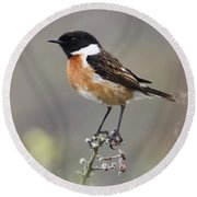 Stonechat Round Beach Towel by Terri Waters