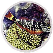 Round Beach Towel featuring the photograph Stoplight Parrotfish Initial Phase by Perla Copernik