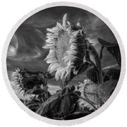 Strength Of A Sunflower Round Beach Towel
