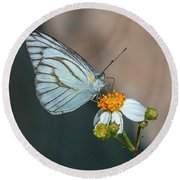Striped Albatross Butterfly Dthn0209 Round Beach Towel