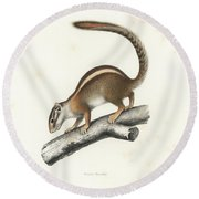 Round Beach Towel featuring the drawing Striped Bush Squirrel, Paraxerus Flavovittis by J D L Franz Wagner