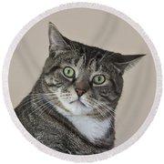 Stroppy Cat Round Beach Towel