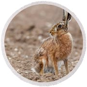 Stunning Large Wild Brown European Hare In The Ploughed Fields O Round Beach Towel