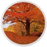 Sturdy Maple In Autumn Orange Round Beach Towel