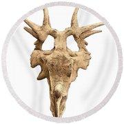 Styracosaur Skull Round Beach Towel