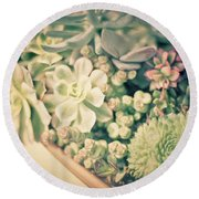 Round Beach Towel featuring the photograph Succulent Garden by Ana V Ramirez