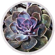 Succulent Plant Poetry Round Beach Towel