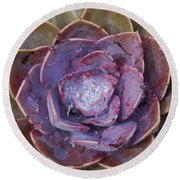 Succulent Star Round Beach Towel