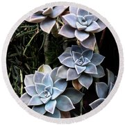 Succulents Graptopetalum Paraguayense     Round Beach Towel