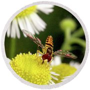 Round Beach Towel featuring the photograph Sugar Bee Wings by Meta Gatschenberger