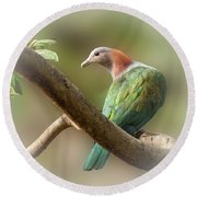 Sulawesi Green Imperial Pigeon Round Beach Towel
