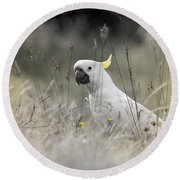 Round Beach Towel featuring the photograph Sulphur Crested Cockatoo by Chris Armytage