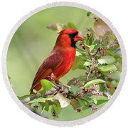 Summer Cardinal Round Beach Towel