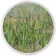 Round Beach Towel featuring the photograph Summer Cattails by Maria Urso