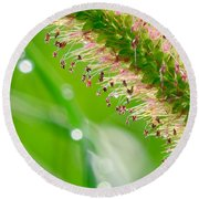 Summer Grass Round Beach Towel