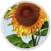 Summer Sunflower Round Beach Towel