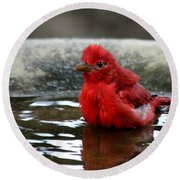 Summer Tanager In Bird Bath Round Beach Towel