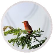 Round Beach Towel featuring the photograph Summer Tanager In Mesquite Scrub by Robert Frederick