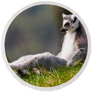 Sun Bathing Ring-tailed Lemur  Round Beach Towel