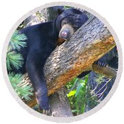 Sun  Bear - Afternoon Nap Round Beach Towel by Laurel Talabere