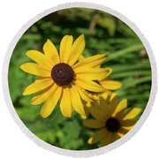 Sun Drenched Daisy Round Beach Towel