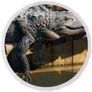 Sunbathing Gator Round Beach Towel