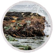 Round Beach Towel featuring the photograph Sunbathing Starfish by Penny Lisowski