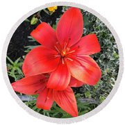 Sunbeam On Red Day Lily Round Beach Towel