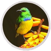 Sunbird Round Beach Towel